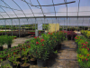 floweredplants