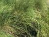 grass-cord