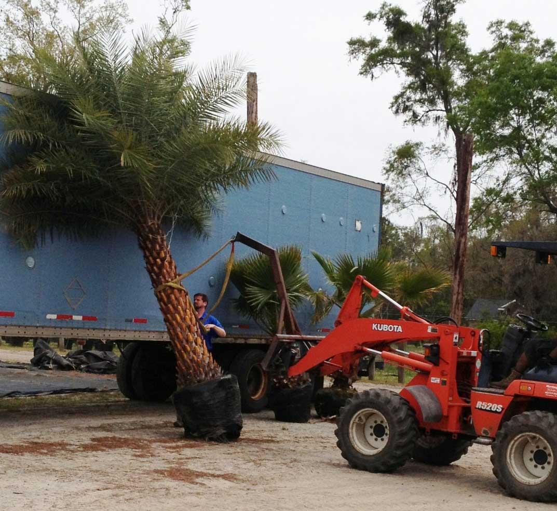 palm-sylvester